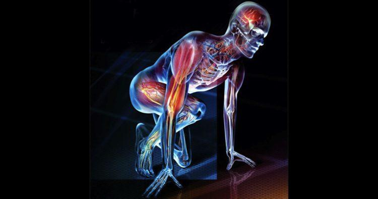 Tom myers anatomy trains courses